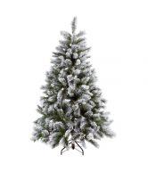 TREE OF THE MONTH Vánoční stromek smrk zasněžený